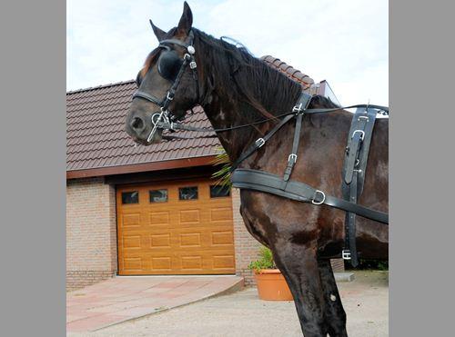 http://www.horsensportservice.dk/